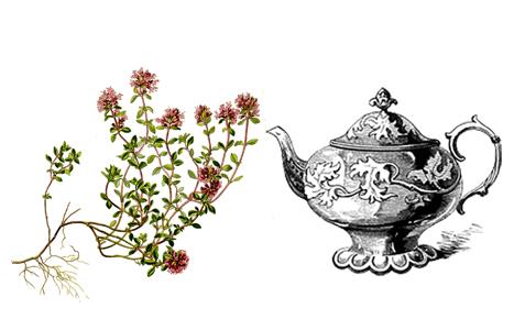 čaj z mateřídoušky