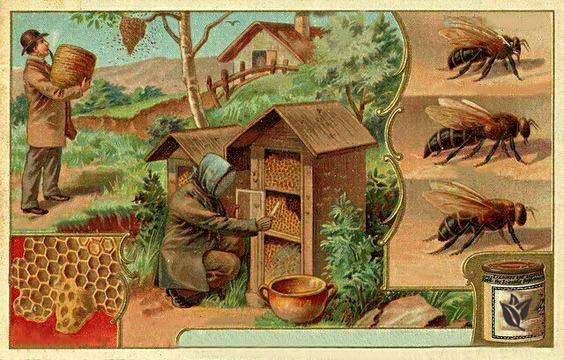 vyroba-medu