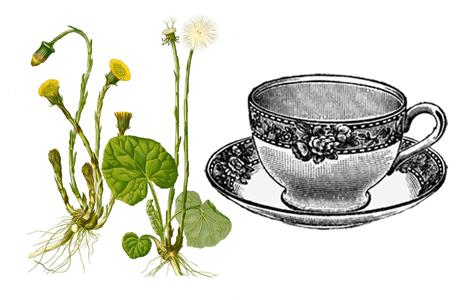 podbělový čaj