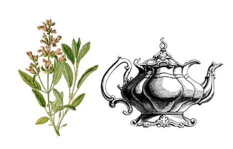 šalvějový čaj